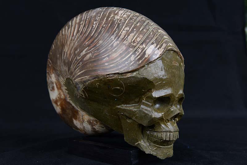 Ammonite Skulls